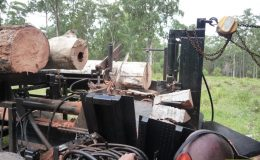 blackbutt-engineering-firewood-processor-10